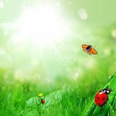 image of ladybug  - sunny green field with ladybugs and butterfly - JPG