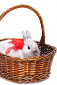 picture of white rabbit  - White rabbit with red ribbon in a basket isolated on white background - JPG