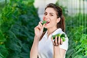 stock photo of cucumbers  - Happy Young woman holding and eating cucumbers in a hothouse cultivated with green fresh cucumber plants - JPG