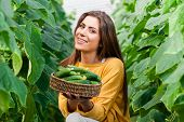 picture of cucumbers  - Happy Young woman holding and eating cucumbers in a hothouse cultivated with green fresh cucumber plants - JPG