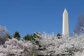 picture of obelisk  - The Washington Memorial was built to commemorate George Washington  - JPG