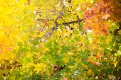 stock photo of fall trees  - Bright autumn leaves in the natural environment - JPG