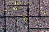 stock photo of terrazzo  - Petals of a yellow flower scattered across a brick surface outside - JPG
