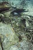 foto of school fish  - school of fish at the bottom of a ship wreck - JPG