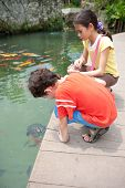 image of fish pond  - Young boy with sister feeding ornamental koi carp fish in a pond - JPG