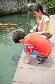 image of koi fish  - Young boy with sister feeding ornamental koi carp fish in a pond - JPG