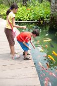 foto of koi fish  - Young boy with sister feeding the koi carp fish in the ornamental pond - JPG