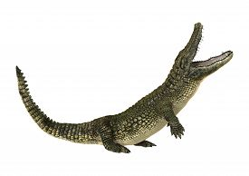 picture of gator  - 3D digital render of an American alligator or Alligator mississippiensis isolated on white background - JPG