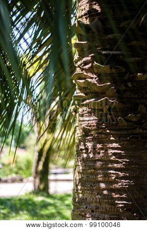Palm tree close up; Palm tree plant
