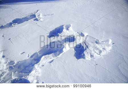 Snow angel in winter and Footprints in the snow