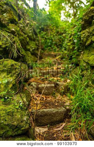 Rocky stairs into the jungle
