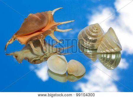Sea Shells, Sky Reflection