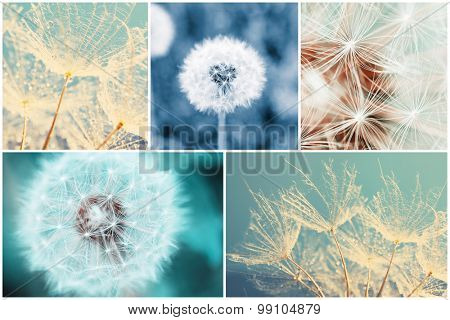 Beautiful nature collage with dandelion flowers