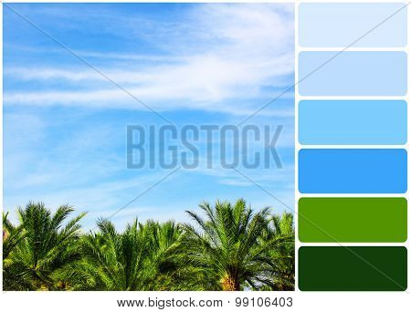Palm tree on blue sky background and palette of colors