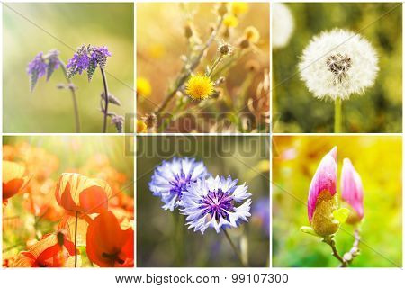 Beautiful nature collage with flowers