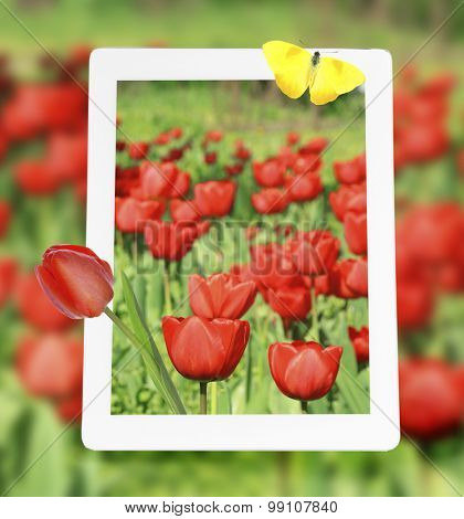 Tablet with nature wallpaper on screen on poppies field background