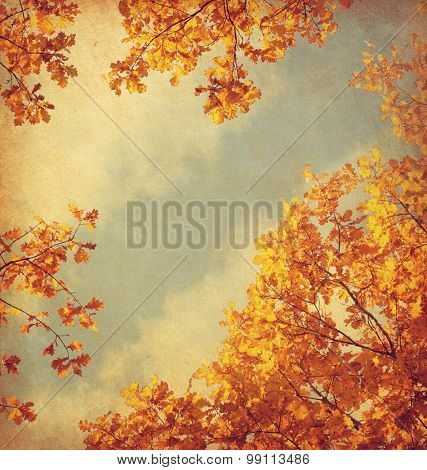 Retro image of Autumn leaves on the sky background. Added paper texture.  Toned image