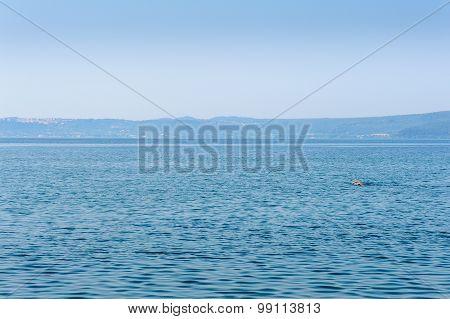 Person Swimming Alone In Big Lake