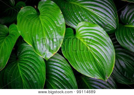 green leafs - abstract natural background