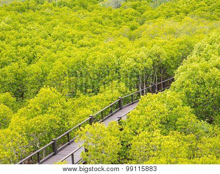 Bridge And Rhizophora Apiculata Forest In Thailand.