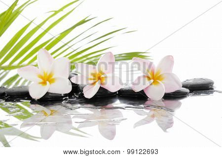 frangipani and set of stones with palm on wet
