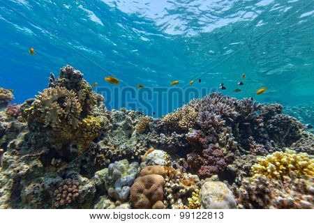 Beautiful coral reef with fish in Red sea