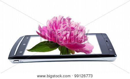 Peony Flower On Display Smartphone. Collage