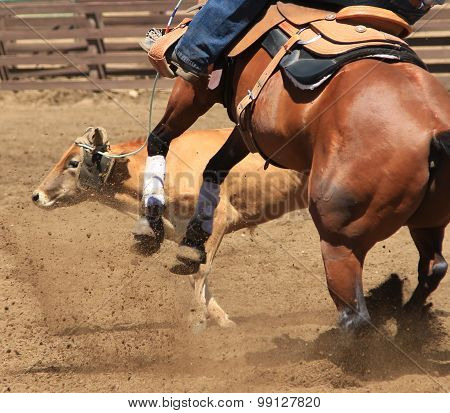 A cowboy and his horse are roping a cow.