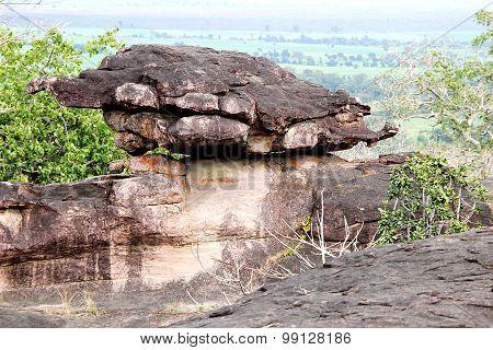 Rocky Land Tortoise