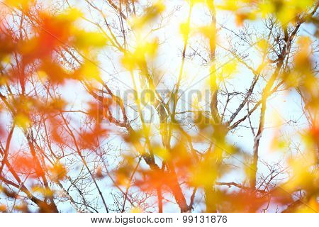 Defocused autumn maple leaves background
