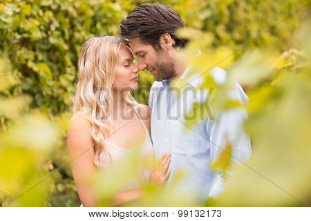 Young romantic couple embracing each other in the grape fiels