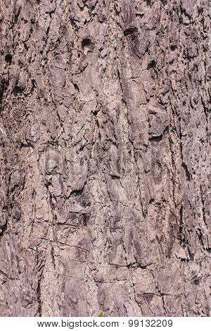 Bark Texture And Background