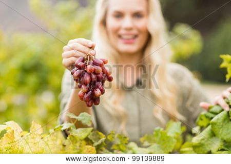 Portrait of a smiling blonde winegrower holding a red grape