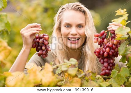 Portrait of a smiling blonde winegrower holding red grapes