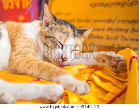 The Cat Is Sleeping In The Church On The Yellow Couch.