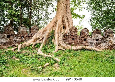 Tree roots on the old great brick wall.Thailand.