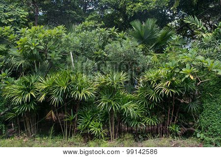 Park or forest fresh green bio background with abstract foliage and bright summer sunlight.