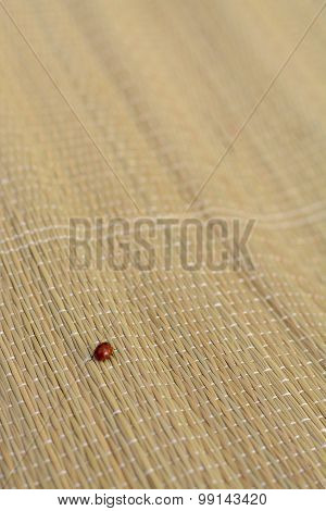 Ladybug Crawling On A Straw Mat