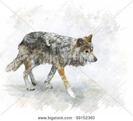 Digital Painting Of Walking Wolf