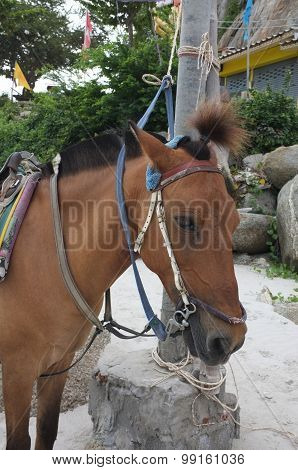 Brown horse on beach for tourists recreation