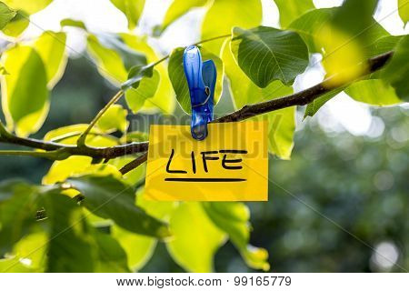 Beautiful Vivacious Life Concept