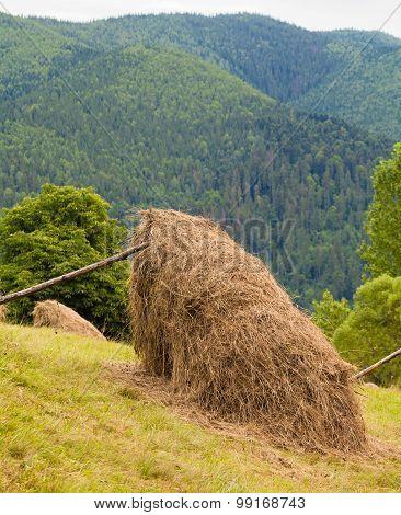 Sheaves Of Hay In The Carpathians