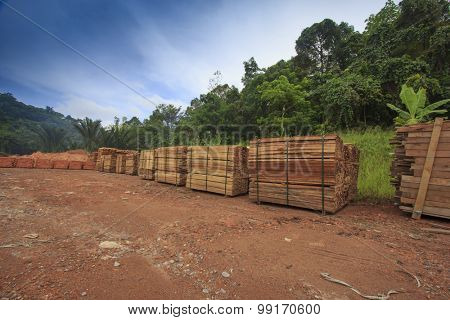 Stacks of timber from logged rainforest in Borneo, Malaysia