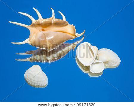 Sea Shells, Mirror