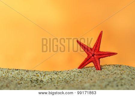 starfish on sand on background of sunset sky