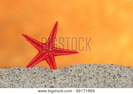 starfish on sand on background of sunset sky