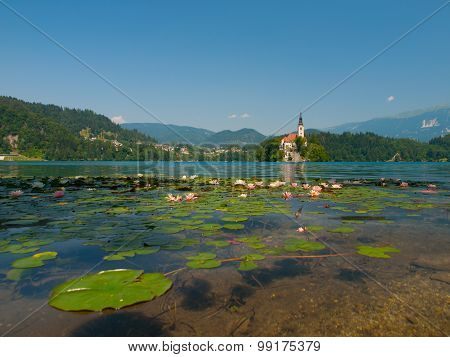 Bled Island and Lake with water lilies