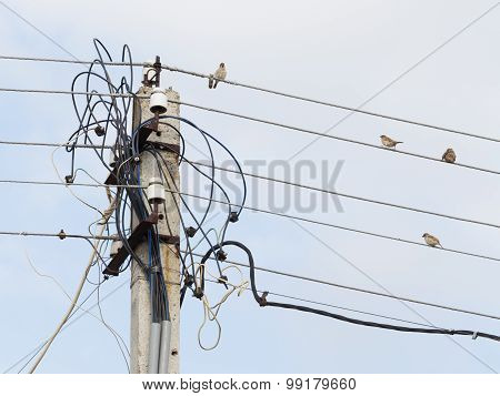 Sparrows On The Wires