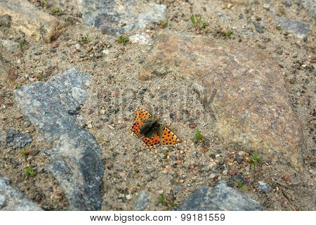 Single butterfly on stones background