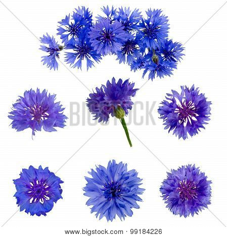 Set Of Cornflowers